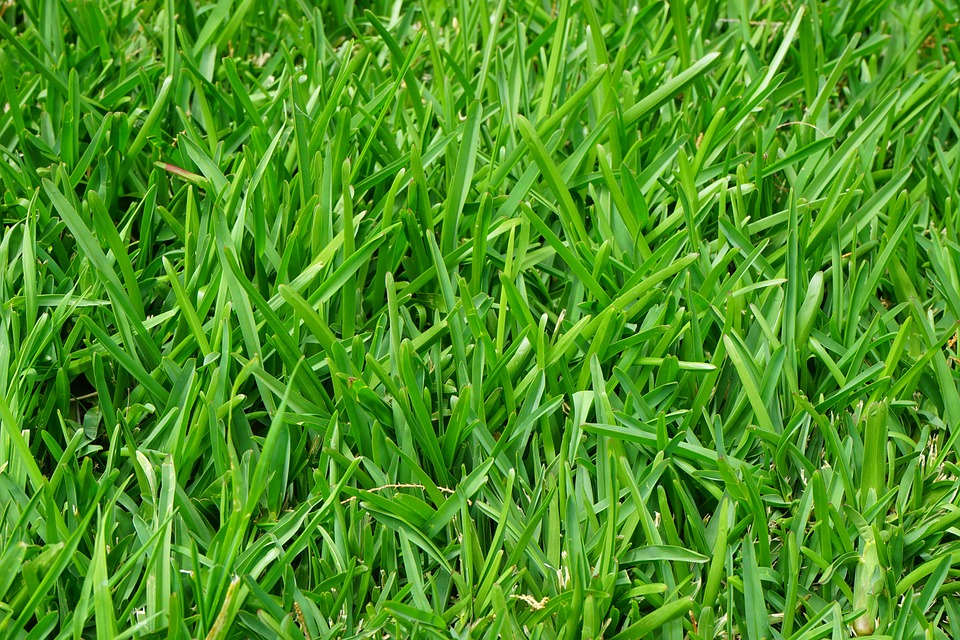 Read more about the article Why is My Grass Brown?