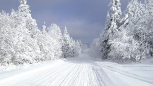 Read more about the article What Do Landscapers Do In The Winter?