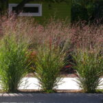 What You Need to Know About Aeration, Overseeding, and Sodding + Plant of the Month: Switchgrass