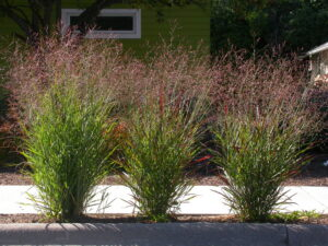 Read more about the article What You Need to Know About Aeration, Overseeding, and Sodding + Plant of the Month: Switchgrass