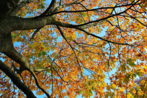 Read more about the article Did You Know It's Time for Your Lawn and Landscape Fall Clean Ups?
