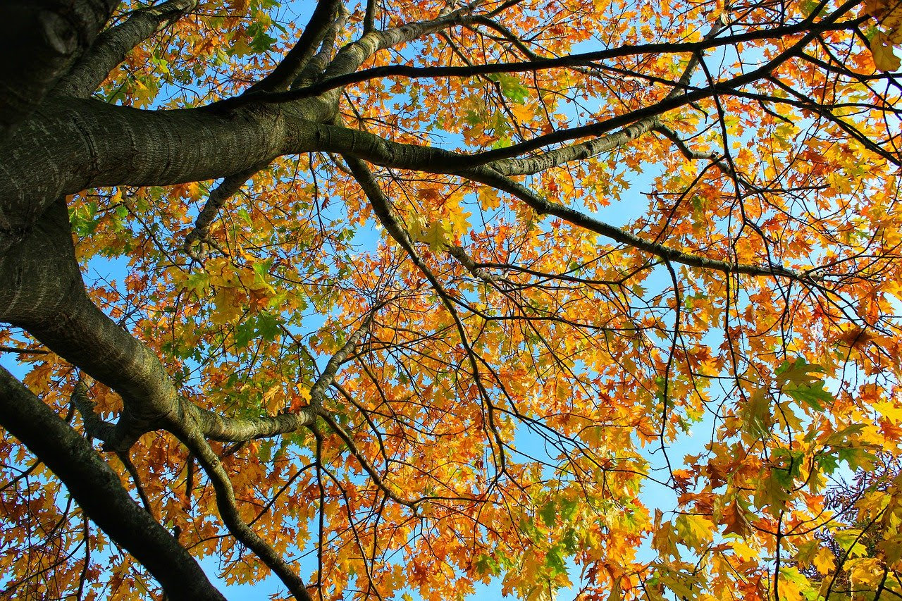 You are currently viewing Did You Know It's Time for Your Lawn and Landscape Fall Clean Ups?